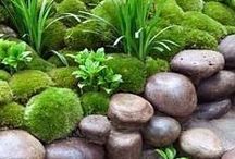 Gardens & Gardening / by Jackie Brown
