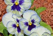 Flowers & Plants / by Jackie Brown