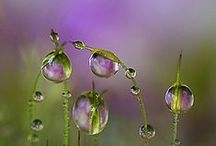Drops, Dew & Bubbles