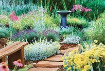 GARDENING / Love Began in A Garden... / by Robbie