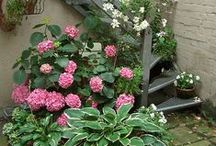 Gardens, Flowers = Beauty! / by Elaine