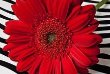 Red, Black, & White ℒ❁Ѵ℮ / Romantic. Eye catching. Awe inspiring.  / by Jennifer Unsell