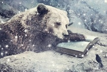 Bear Love ♡ / Because bears deserve a page of their own. They are just that cool!  / by Jennifer Unsell