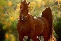 Fantastic Animals / The most I love