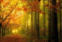 Autumn / by T Hewitt