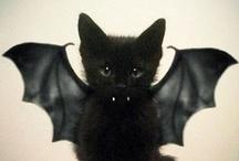 Halloween / Shocking, Spooky, Creepy, Scary, Hairy, Slimey, Frightful, Fiendish, Halloween! :-) / by Louise Hutchings
