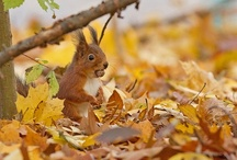 Autumn  / by Louise Hutchings