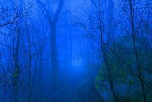 Forest / by T Hewitt
