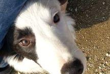 Wilfred / Wilfred Mangiaquaglia un non cane