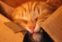 Happy Pictures: Cute Cats / Cute cats and the occasional other cute animal