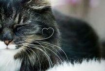 Cats / :3