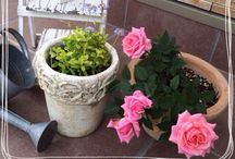 gardening / my garden