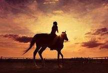 Horses / Strength and Friendship