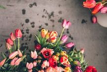 Flowers & backgrounds / backgrounds, colors, flowers, inspiration