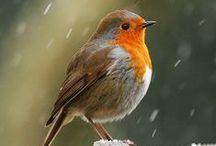 Birds / Spectacular Nature