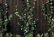 green / by Vito Potato