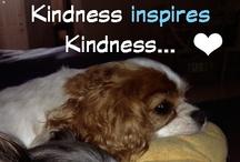 Inspire Kindness / The Little Blue Dog children's book series promotes kindness, compassion and responsible pet ownership. www.facebook.com/Authorkarenjroberts www.thelittlebluedog.com
