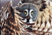 Owl is wisdom / Owl is everywhere bringing more wisdom in our lives