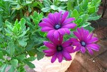garden dreams II / More garden lovelies and ideas / by Ginger Pettingill