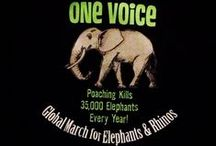 Global March for Elephants and Rhinos / 135 locations around the world came together as one voice to stop the slaughter from poachers - every 15 minutes and Elephant is killed for their tusks, every 9 hours a rhino is killed for their horn.