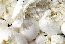 f l o r a l / Flowers everywhere  / by Christy Alexander