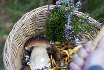 w i l d c r a f t / Herbalism, wildcrafting, naturalist life..