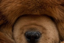 Doggie / by Patti Burke
