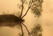 Symmetry / by Kathy Sundprescher