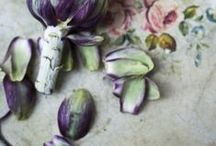 // lavender / by Laicie Heeley