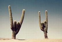 For The Love of Cactus.