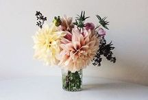 * Blooms * / i always need flowers in my life / by a wondering gypsy :♥ m e l l i