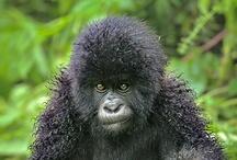 Primates / by Dee Sicilia