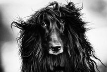 Dog Photography ❤ / by Janine Dege