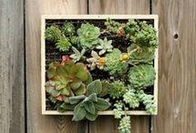 cacti & succulents