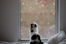 Pets (Okay... Cats)