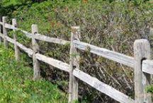 Fences/Gates / by Trudi Crookshanks
