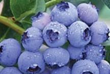 Arándanos -Blueberries