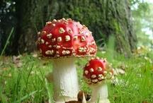 Mushroom / by Jorgelina