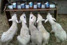 Goat Goods