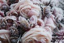 Pink | Pale rose | Peacock
