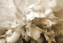 Beige | Stone | Vanilla ice