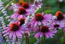 Plants i love/grow