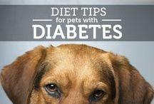 Diabetes in Pets / by PetMeds