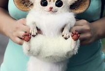 Prostě roztomilý/Just cute