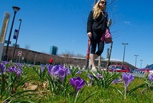 UAlbany in Bloom / by University at Albany, SUNY