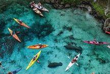Kayak, Dive, & Swim / by Megan Burns