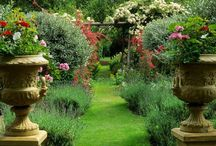Garden: Of earthly delights / by Dawn Weisberg