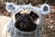 Animals In Knitwear / It's not right, but that doesn't stop it from happening.