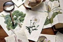 Botanical Painting Inspiration / Colors and shapes that inspire my own artwork. I am inspired by antique botany work and botanical prints as well as writings and journals kept by naturalists such as John Muir.