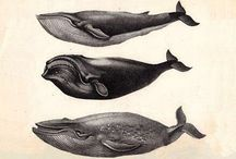 [Whales] / Interesting beautiful creatures